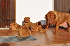 cuccioli-dogue-de-bordeaux-birba-166