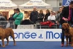 dogue_monticano_evento_internazionale_gonzaga_11