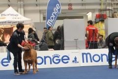 dogue_monticano_evento_internazionale_gonzaga_15