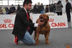 dogue_monticano_evento_internazionale_reggio_emilia_2
