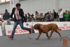 dogue_monticano_evento_internazionale_reggio_emilia_5