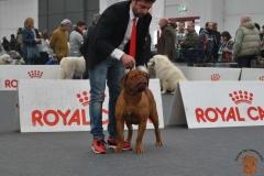 dogue_monticano_evento_internazionale_reggio_emilia_9