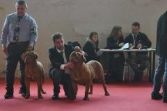 dogue_monticano_evento_internazionale_sanremo_35