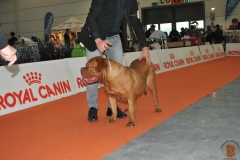 dogue_monticano_evento_internazionale_verona_1