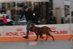 dogue_monticano_evento_internazionale_verona_11