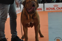 dogue_monticano_evento_internazionale_verona_12