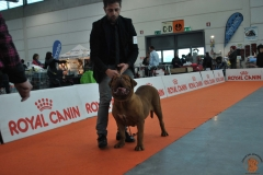 dogue_monticano_evento_internazionale_verona_2