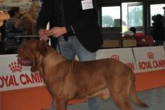 dogue_monticano_evento_internazionale_verona_7