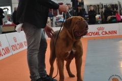 dogue_monticano_evento_internazionale_verona_9
